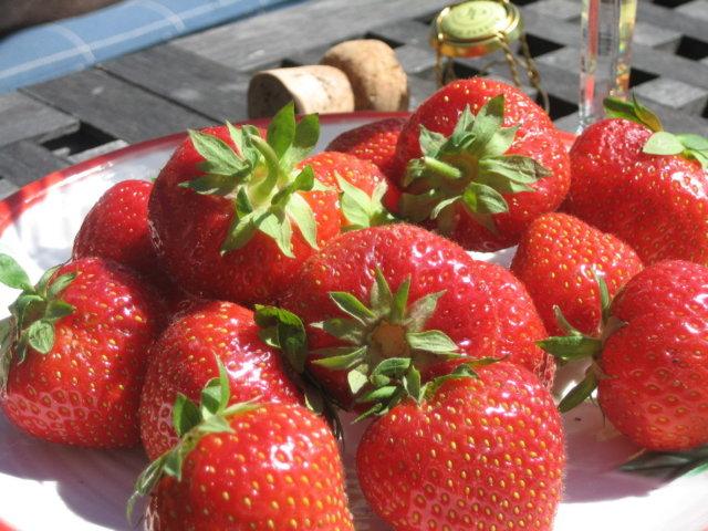 Shamppanjaa ja mansikoita 2