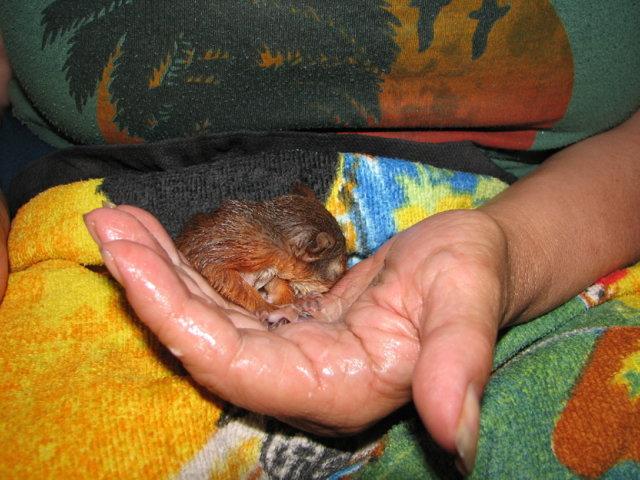OravaVauvan Maito