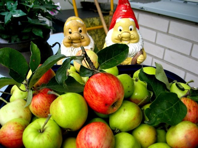 Melkein tuore Omenahillo 1