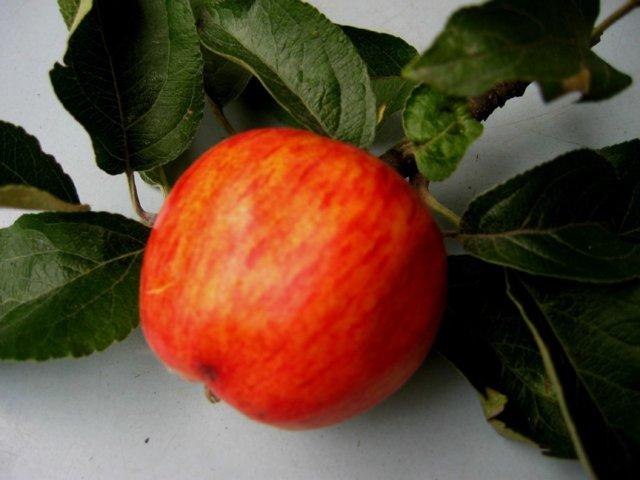 Melkein tuore Omenahillo 2