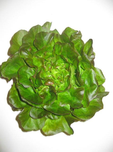 Salanova-salaatti 1.