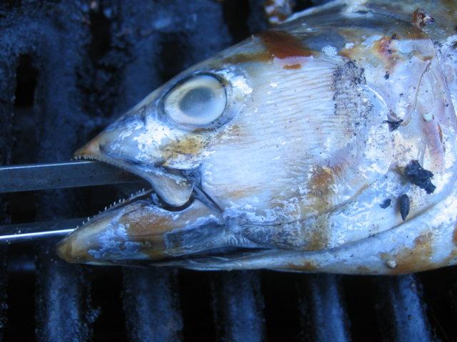 Grillattu tonnikala 1
