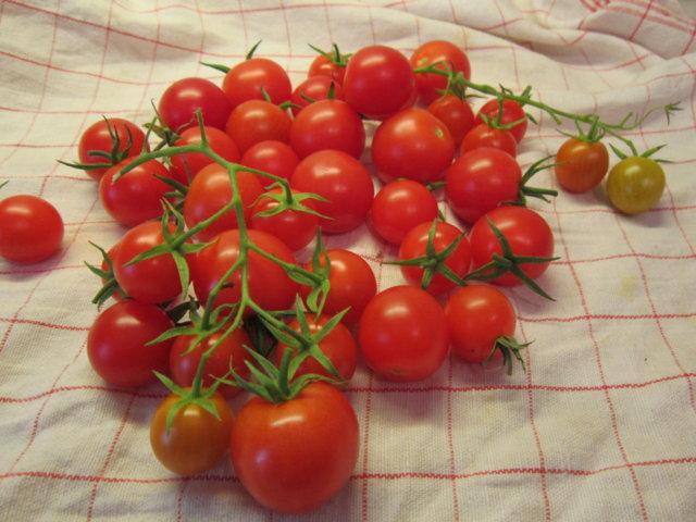 Säilötyt tomaatit 10.10.2016 2
