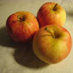 Kisun omenan säilöntä+piirakka