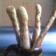 Rosmariini valkosipuli leipätikut